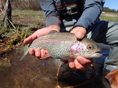 Truckee Area Fly Fishing Report for April 26th 2019