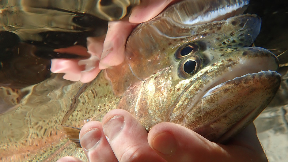 Truckee Tahoe Fly Fishing Report Oct 2nd, 2021
