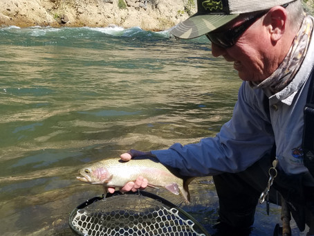 Truckee Tahoe Area Fly Fishing Report June 13th, 2019