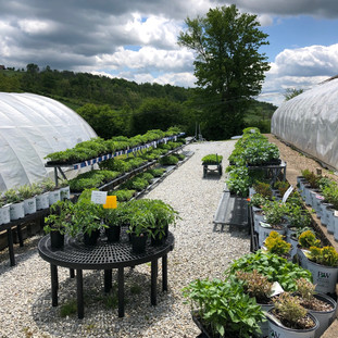 Vegetable Area