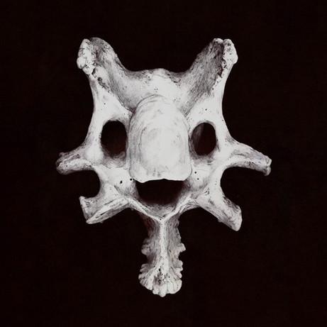 Happy Bone No.1