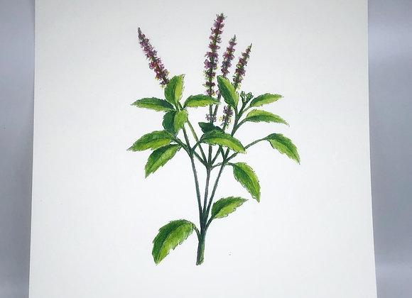 Holy Basil Herbal Print