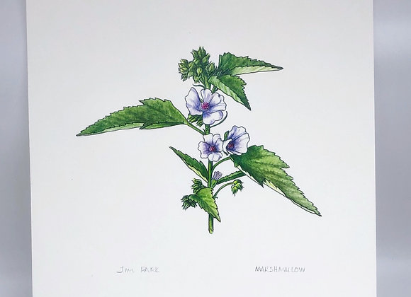 Marshmallow Herb Print