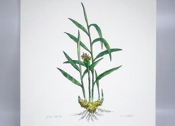 Ginger Herbal Print