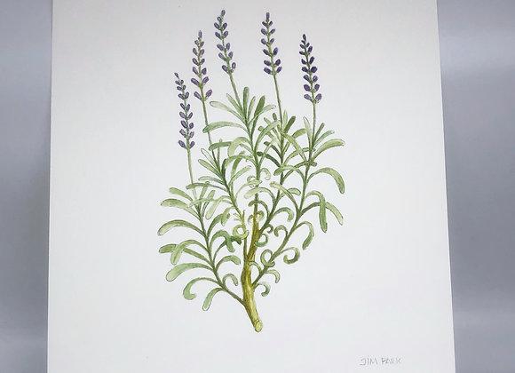 Lavender Herbal Print