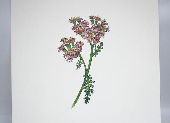 Yarrow Herbal Print