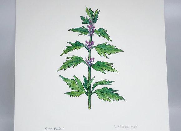 Motherswort Herbal Print