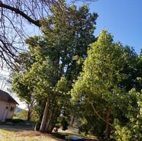 treesshed.jpg