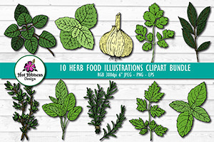 Herb illustrations