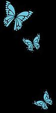 My favourite Blue Morpho butterflies