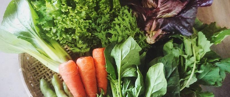 お試し野菜セット(送料無料)