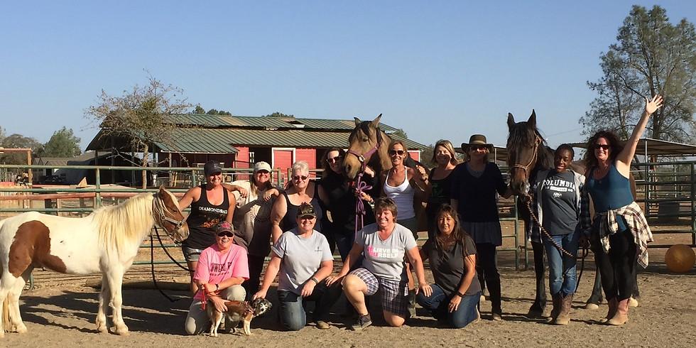 Equine Assisted Learning 8 week Workshop (1)