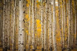 Gunnison National Forest, Colorado