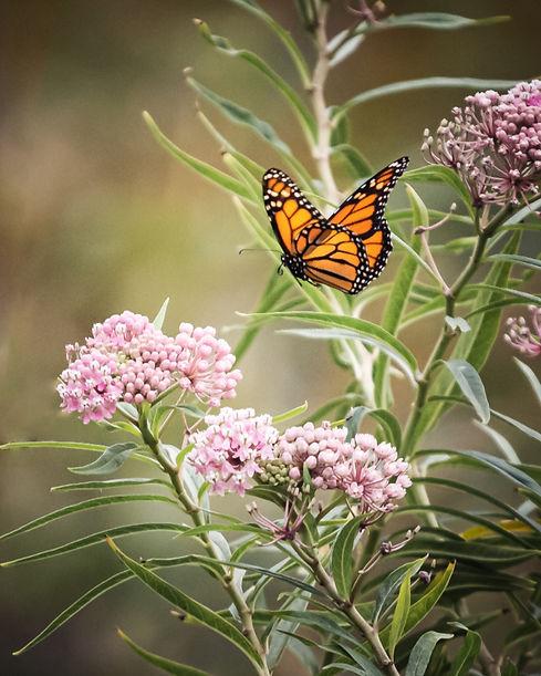 butterfly-close up_LEHTQTIMJT.jpg