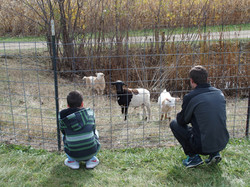 Checking out the Goats!