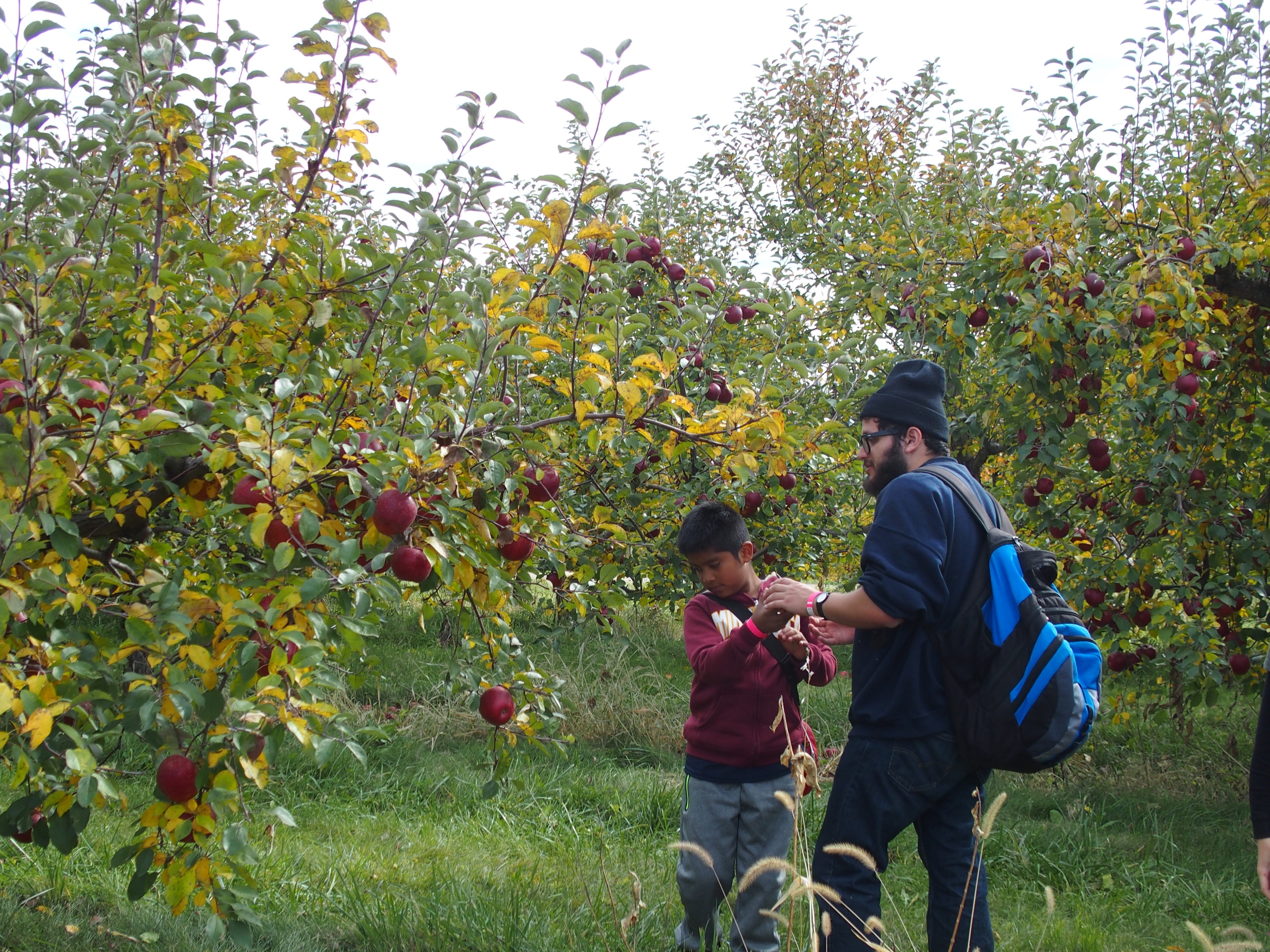 Finding the Best Apples!