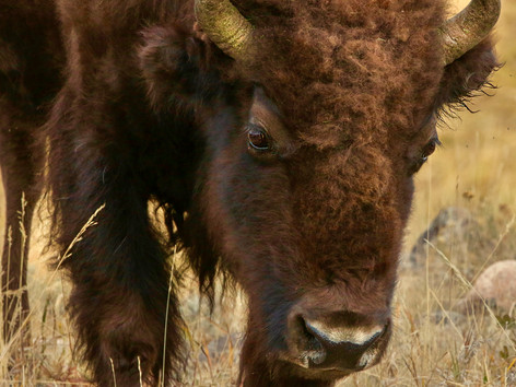 USA: Yellowstone & Teton National Parks - 2018