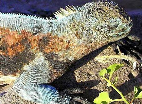 Ecuador: Galapagos Islands 2003