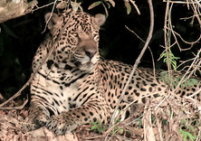 Brazil: The Pantanal
