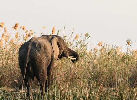 Zambia Safari- 2017