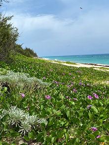 Bermuda030.jpg