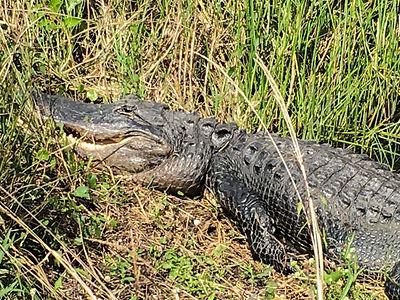 Everglades National Park10.jpg