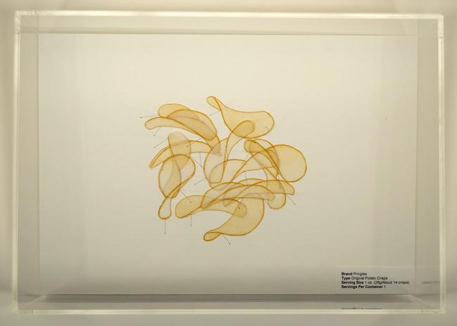Dora Lisa Rosenbaum Serving Size: Pringles Specimen 2007  etching, digital print, insect pins, acrylic box, foam core 6 x 17 x 12 in.