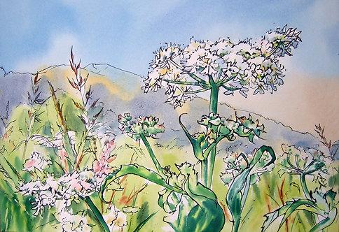 "Tia Lambert "" Field in Summer"" giclee print"