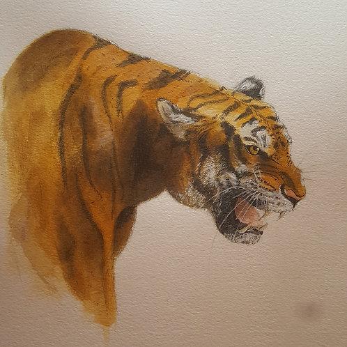 Rae Stevens tiger print