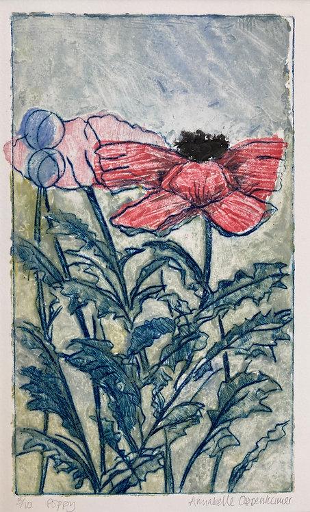 Annabelle Oppenheimer 'Poppy'