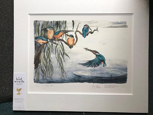 Jackie Morris KINGFISHERS giclee print
