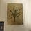 Thumbnail: Jackie Morris Premium Dandelion print