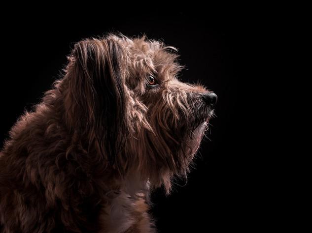 Petra Winkelmann Hundefotgrafie (2 von 3