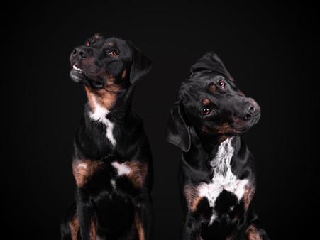 Petra Winkelmann Hundefotgrafie (6 von 8