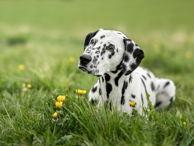 Petra Winkelmann FOTOGRAFIE, Hundefotogr