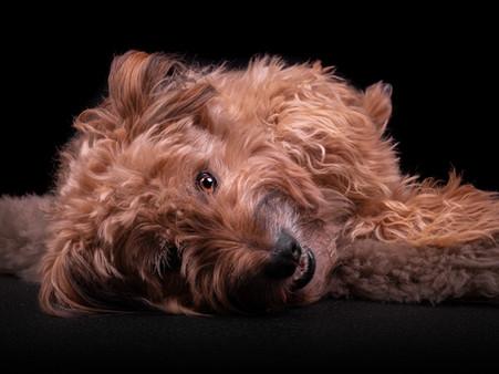 Petra Winkelmann Hundefotgrafie (3 von 3