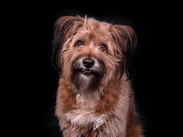 Petra Winkelmann Hundefotgrafie (1 von 3