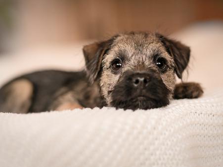 Petra Winkelmann Fotografie, Hundefotgra