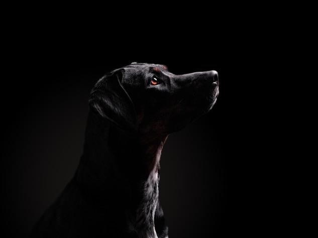 Petra Winkelmann Hundefotgrafie (3 von 8