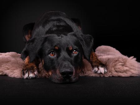 Petra Winkelmann Hundefotgrafie (5 von 8