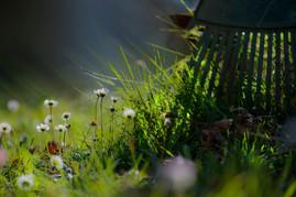 dans-le-jardin