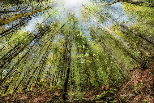 forêt_FLP2696.jpg