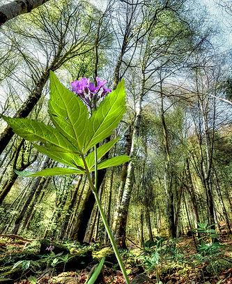 forêt_FLP2733.jpg