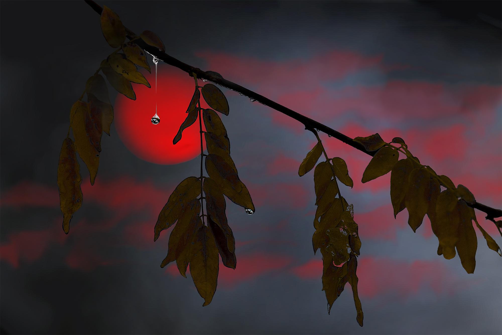 fabien-licata_soleil-de-nuit_FL07150