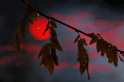 soleil-de-nuit