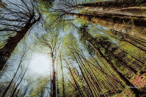 forêt_FLP2741.jpg