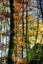automne_FLP9440.jpg