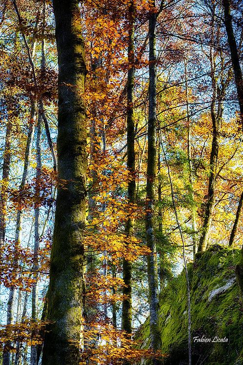 automne_FLP9440