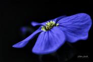 fleur_de_tissus_FLP3130_40x60cm
