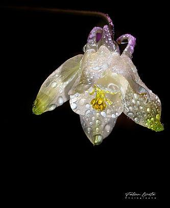 fleur-blanche_FLP3252_web.jpg